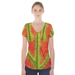 Nature Leaves Short Sleeve Front Detail Top