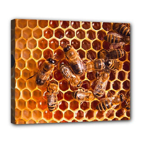Honey Bees Deluxe Canvas 24  X 20