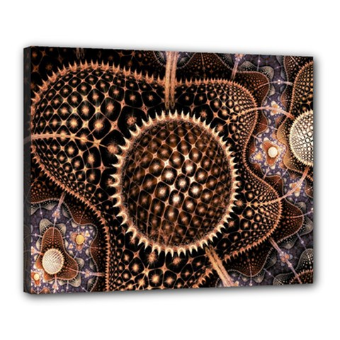 Brown Fractal Balls And Circles Canvas 20  X 16