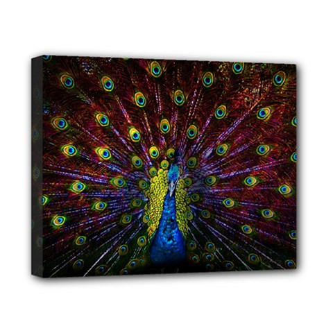 Beautiful Peacock Feather Canvas 10  X 8