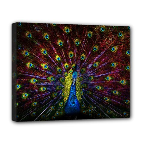 Beautiful Peacock Feather Deluxe Canvas 20  X 16
