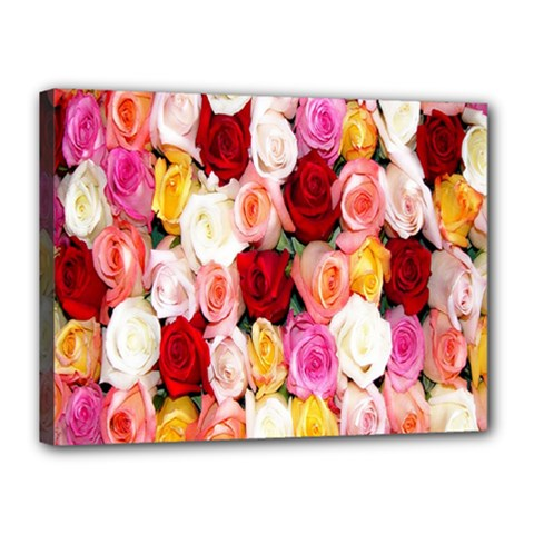 Rose Color Beautiful Flowers Canvas 16  X 12