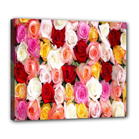 Rose Color Beautiful Flowers Deluxe Canvas 24  X 20