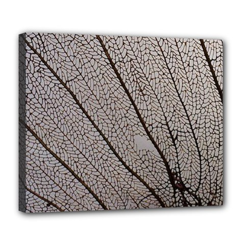 Sea Fan Coral Intricate Patterns Deluxe Canvas 24  X 20