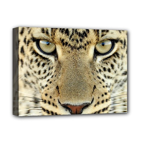 Leopard Face Deluxe Canvas 16  X 12