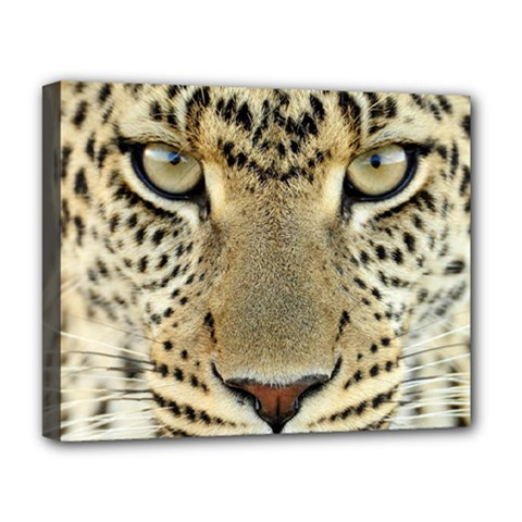 Leopard Face Deluxe Canvas 20  X 16