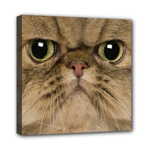 Cute Persian Catface In Closeup Mini Canvas 8  X 8