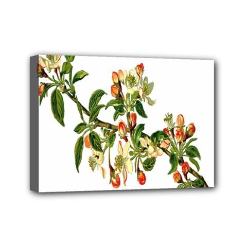 Apple Branch Deciduous Fruit Mini Canvas 7  X 5