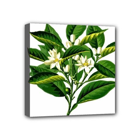Bitter Branch Citrus Edible Floral Mini Canvas 4  X 4