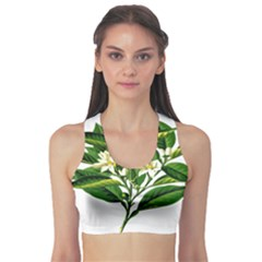Bitter Branch Citrus Edible Floral Sports Bra