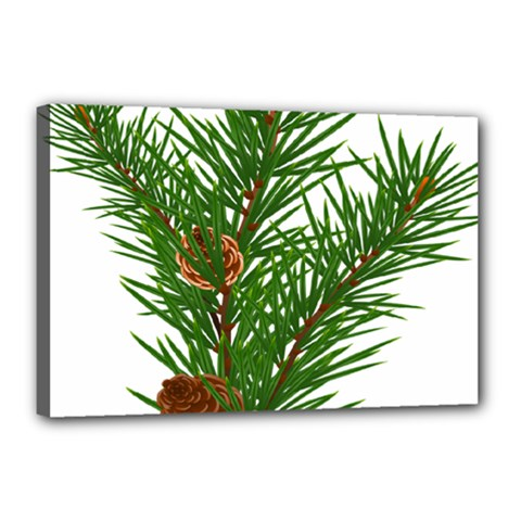 Branch Floral Green Nature Pine Canvas 18  X 12