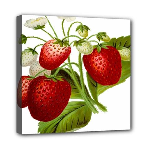 Food Fruit Leaf Leafy Leaves Mini Canvas 8  X 8