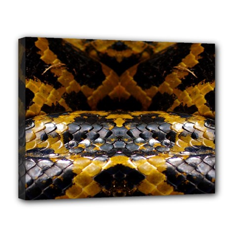 Textures Snake Skin Patterns Canvas 14  X 11