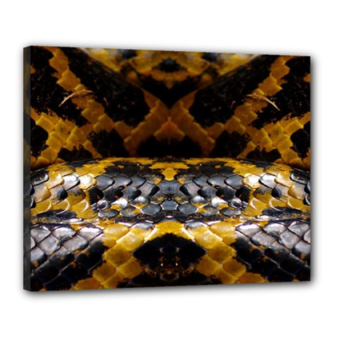 Textures Snake Skin Patterns Canvas 20  X 16