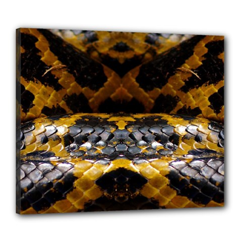 Textures Snake Skin Patterns Canvas 24  X 20
