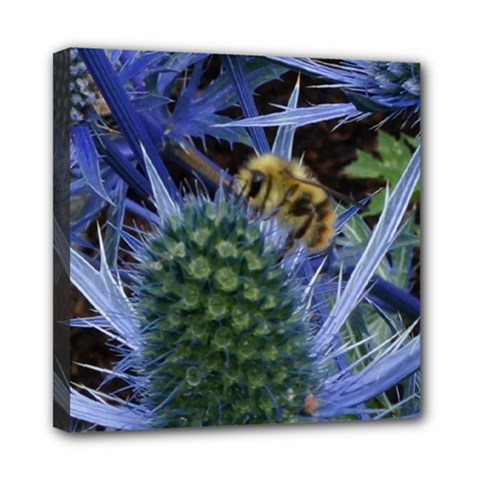 Chihuly Garden Bumble Mini Canvas 8  X 8