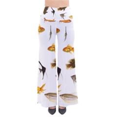 Goldfish Pants