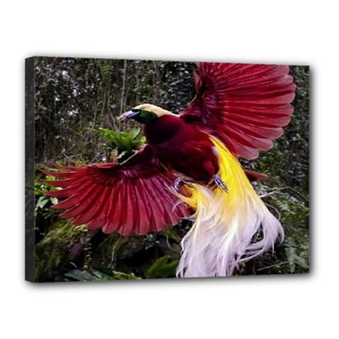 Cendrawasih Beautiful Bird Of Paradise Canvas 16  X 12