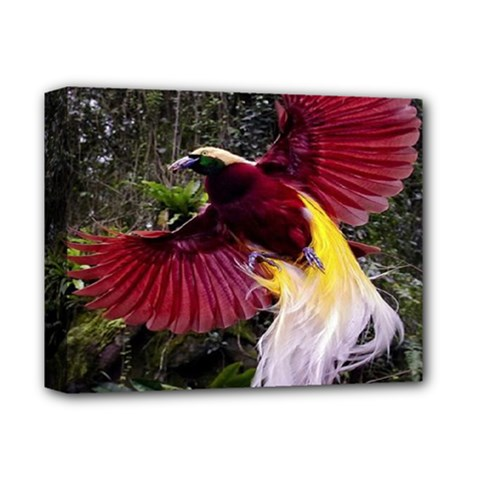 Cendrawasih Beautiful Bird Of Paradise Deluxe Canvas 14  X 11