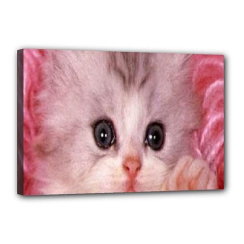 Cat  Animal  Kitten  Pet Canvas 18  X 12