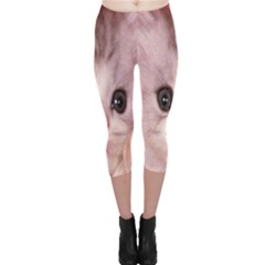 Cat  Animal  Kitten  Pet Capri Leggings