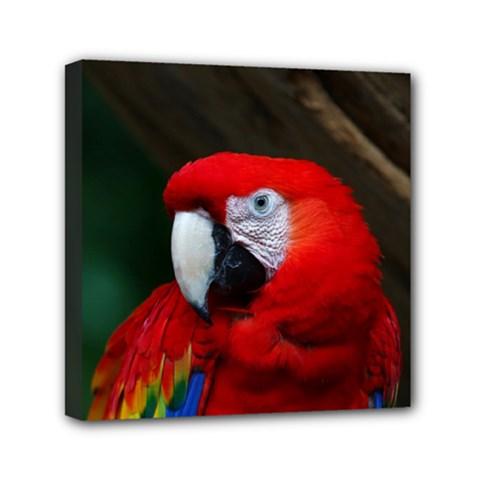 Scarlet Macaw Bird Mini Canvas 6  X 6
