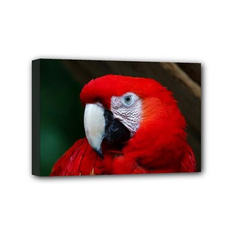 Scarlet Macaw Bird Mini Canvas 6  X 4