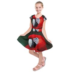 Scarlet Macaw Bird Kids  Short Sleeve Dress
