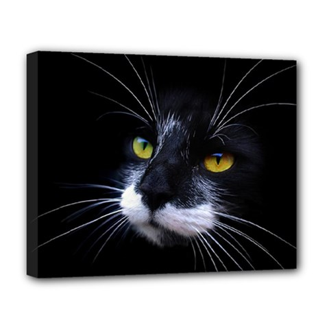 Face Black Cat Deluxe Canvas 20  X 16