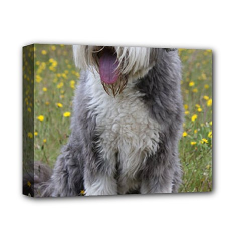 Bearded Collie Sitting Deluxe Canvas 14  X 11
