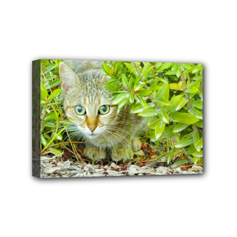 Hidden Domestic Cat With Alert Expression Mini Canvas 6  X 4