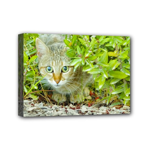 Hidden Domestic Cat With Alert Expression Mini Canvas 7  X 5