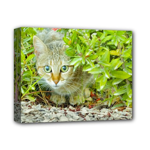 Hidden Domestic Cat With Alert Expression Deluxe Canvas 14  X 11