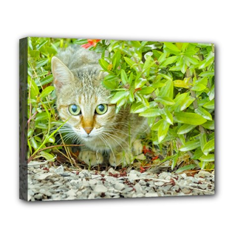 Hidden Domestic Cat With Alert Expression Deluxe Canvas 20  X 16