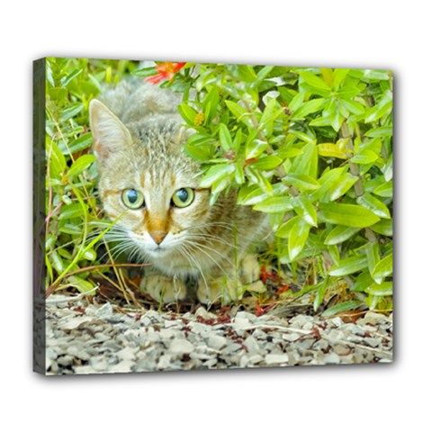 Hidden Domestic Cat With Alert Expression Deluxe Canvas 24  X 20
