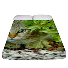 Hidden Domestic Cat With Alert Expression Fitted Sheet (king Size)