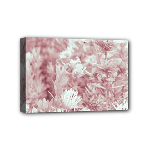Pink Colored Flowers Mini Canvas 6  X 4