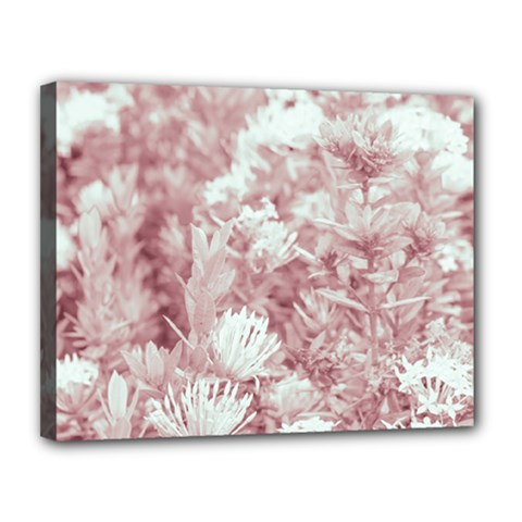 Pink Colored Flowers Canvas 14  X 11