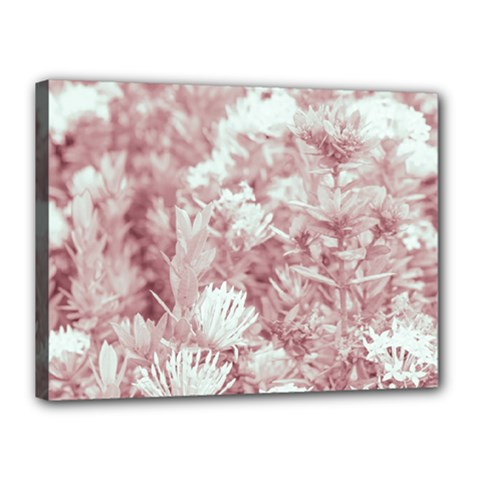 Pink Colored Flowers Canvas 16  X 12