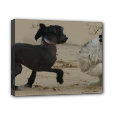 2 Chinese Crested Playing Canvas 10  X 8