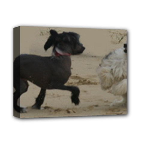 2 Chinese Crested Playing Deluxe Canvas 14  X 11
