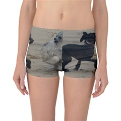 2 Chinese Crested Playing Boyleg Bikini Bottoms