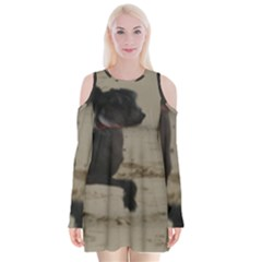 2 Chinese Crested Playing Velvet Long Sleeve Shoulder Cutout Dress
