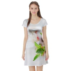 Fragility Flower Petals Tenderness Leaves  Short Sleeve Skater Dress