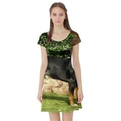 Gsmd Full Short Sleeve Skater Dress