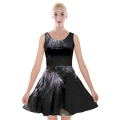 Giant Schnauzer Velvet Skater Dress