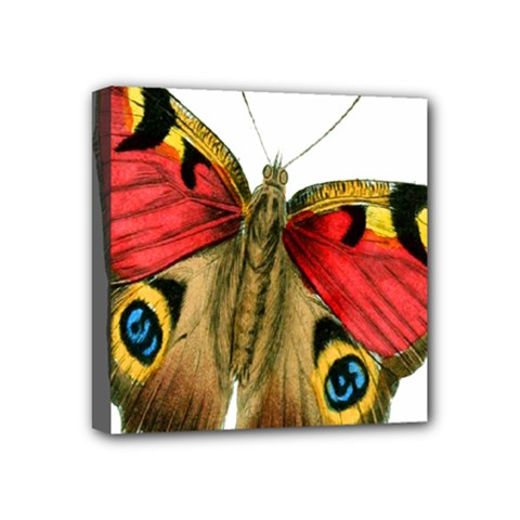 Butterfly Bright Vintage Drawing Mini Canvas 4  X 4