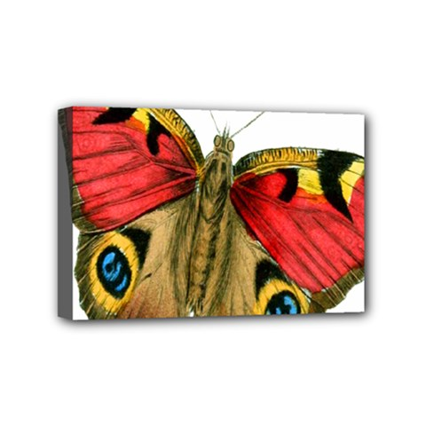 Butterfly Bright Vintage Drawing Mini Canvas 6  X 4