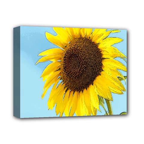 Sunflower Deluxe Canvas 14  X 11