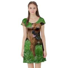 4 Full Staffordshire Bull Terrier Short Sleeve Skater Dress
